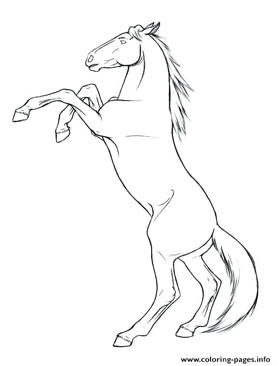 561x739 Beautiful Mustang Horse Coloring Pages Image Horses Printable Plus