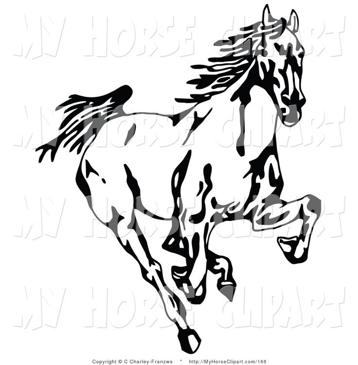 Mustang Horse Line Drawing
