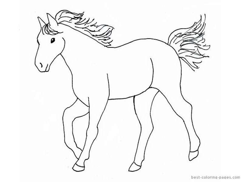 801x600 Horse Drawing For Kids