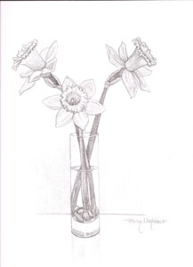217x300 Drawings Amp Illustrations The Art Shoppe