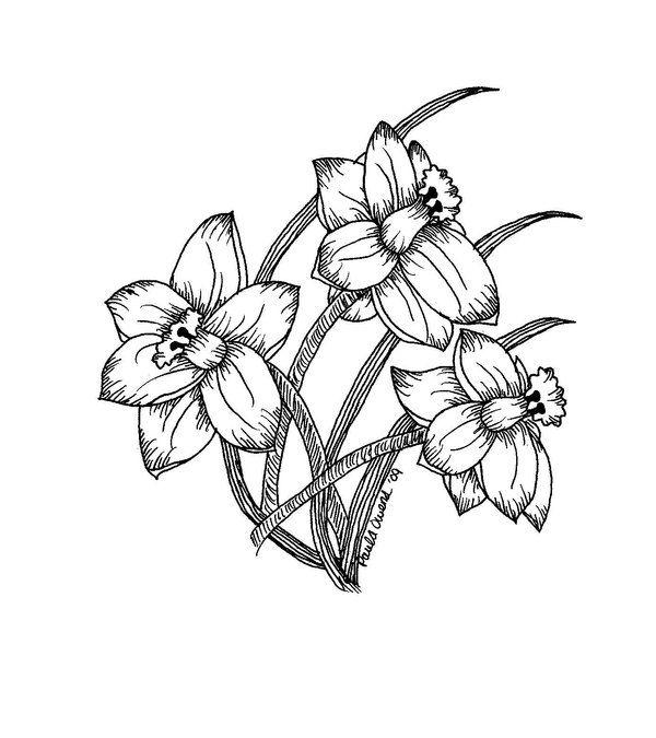 600x675 Drawn Daffodil