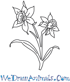 300x350 How To Draw A Narcissus Flower