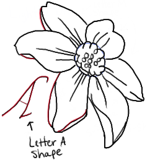 471x517 How To Draw A Narcissus Or Daffodil Flower With Easy Step By Step