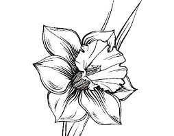 254x199 Image Result For Narcissus Drawing Tattoos Tattoo