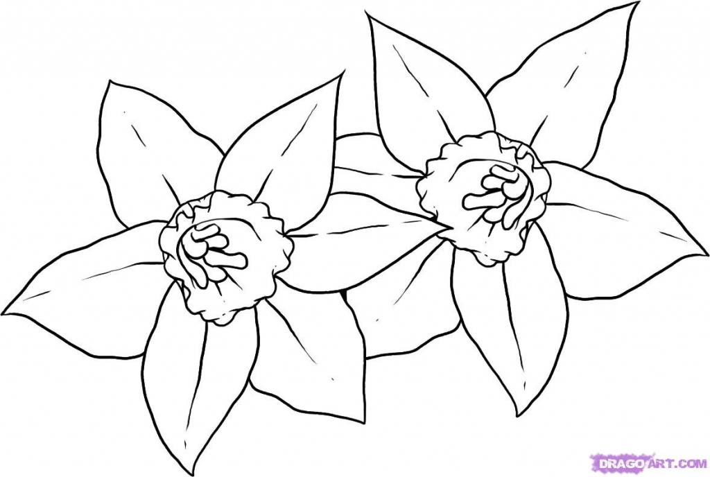 1024x688 Narcissus Flower Drawing How To Draw Daffodils, Stepstep, Flowers