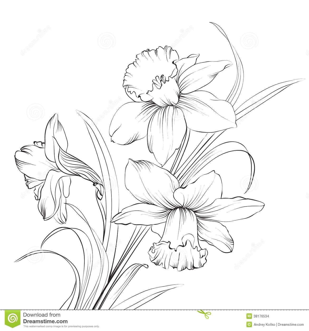 1300x1390 Narcissus Stock Illustrations, Vectors, Amp Clipart (2,085 Stock