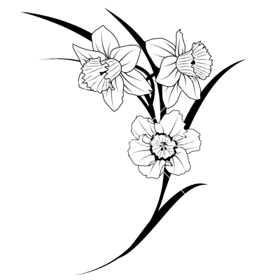 380x400 Narcissus Flowers Vector 536688