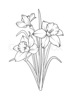 247x320 Set Of Different Flowers Of Narcissus. Hand Drawn Sketch. Template