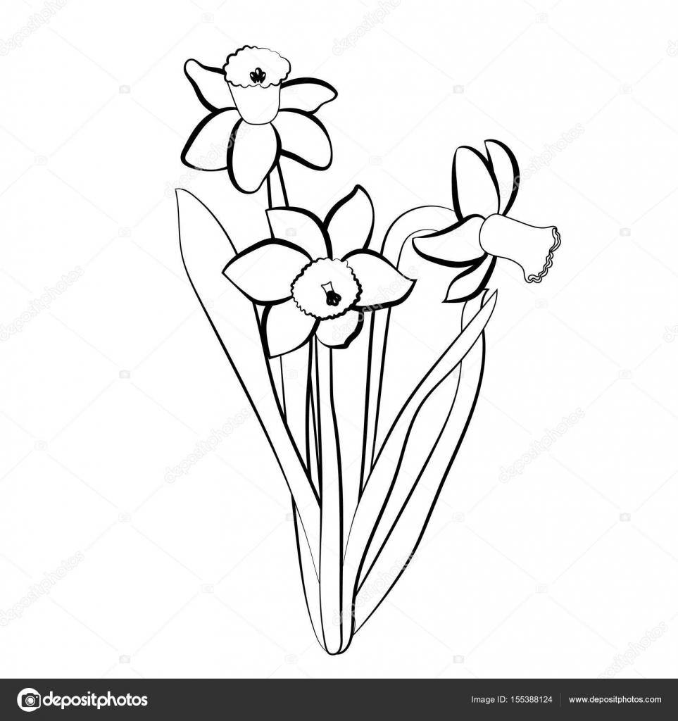 963x1024 Three Hand Drawn Narcissus Flowers. Elegant Vintage Card. White