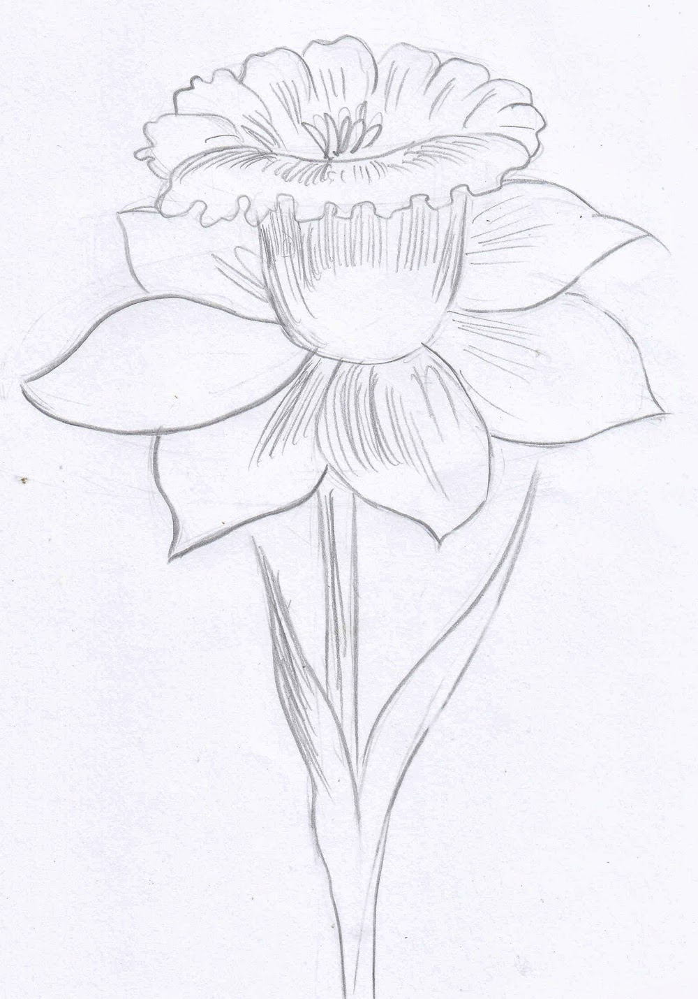1000x1430 Weekly Doodles And Tuts How To Draw A Narcissusdaffodil