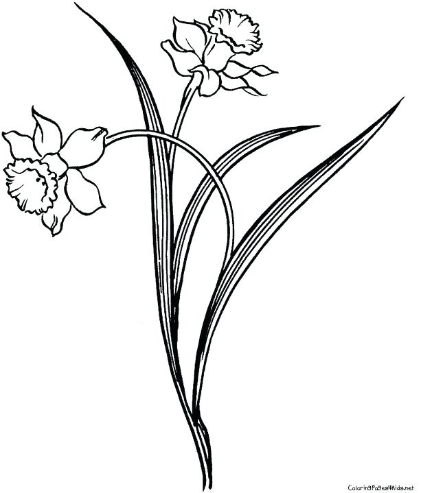 613x719 Daffodil Coloring Page Planting Daffodil Coloring Page Daffodil