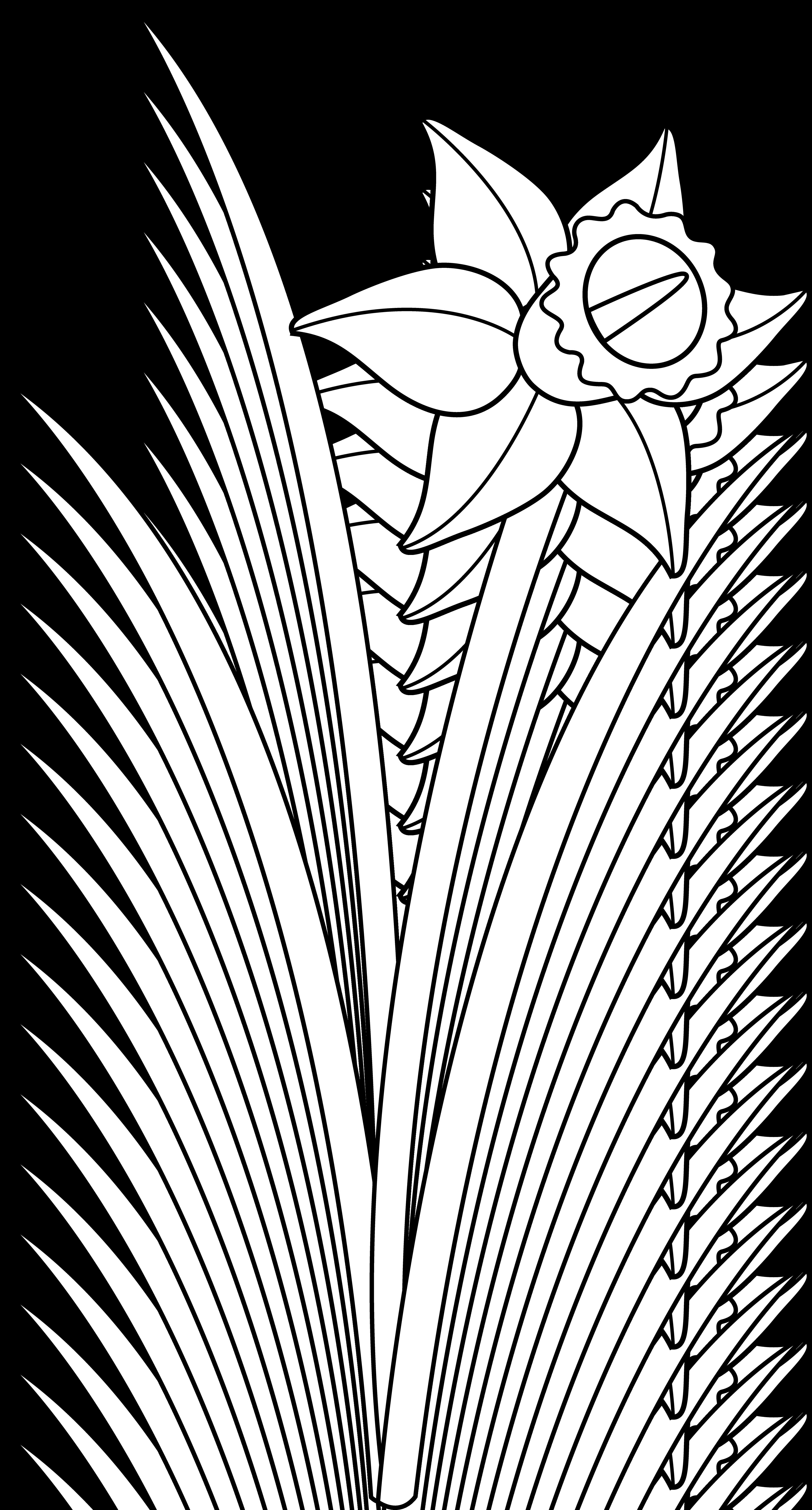 3894x7238 Daffodil Flower Line Art