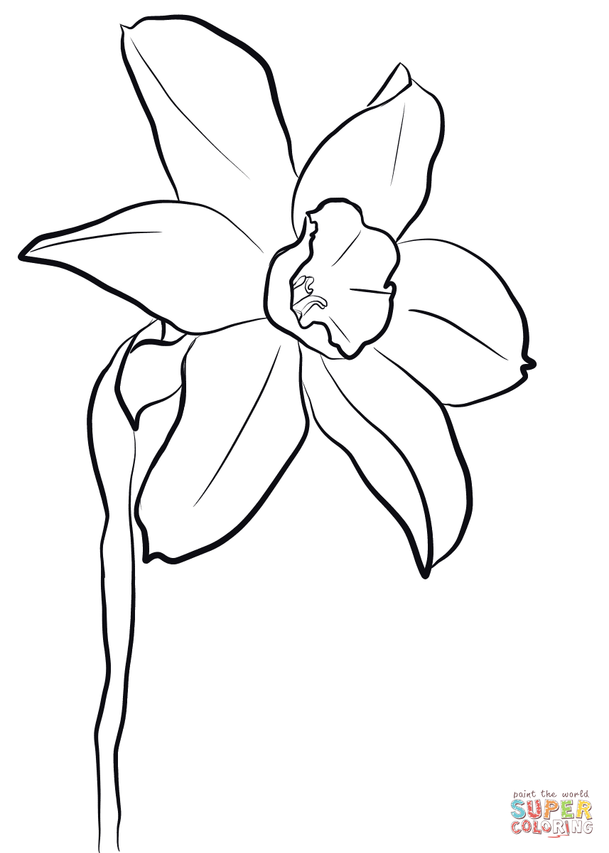 857x1200 Daffodil Coloring Page Free Printable Coloring Pages