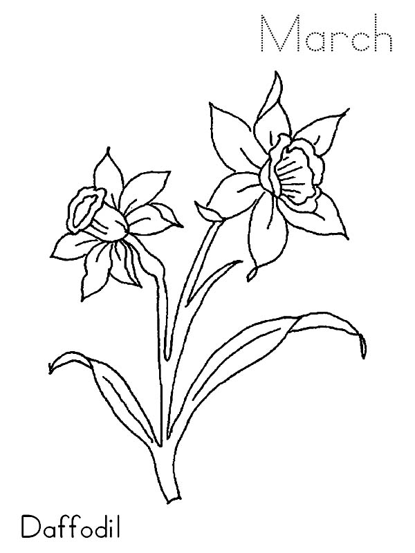 600x800 March Daffodil Flower Coloring Page