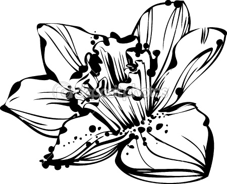 Line Art Flower Design : Narcissus flower drawing at getdrawings free for personal