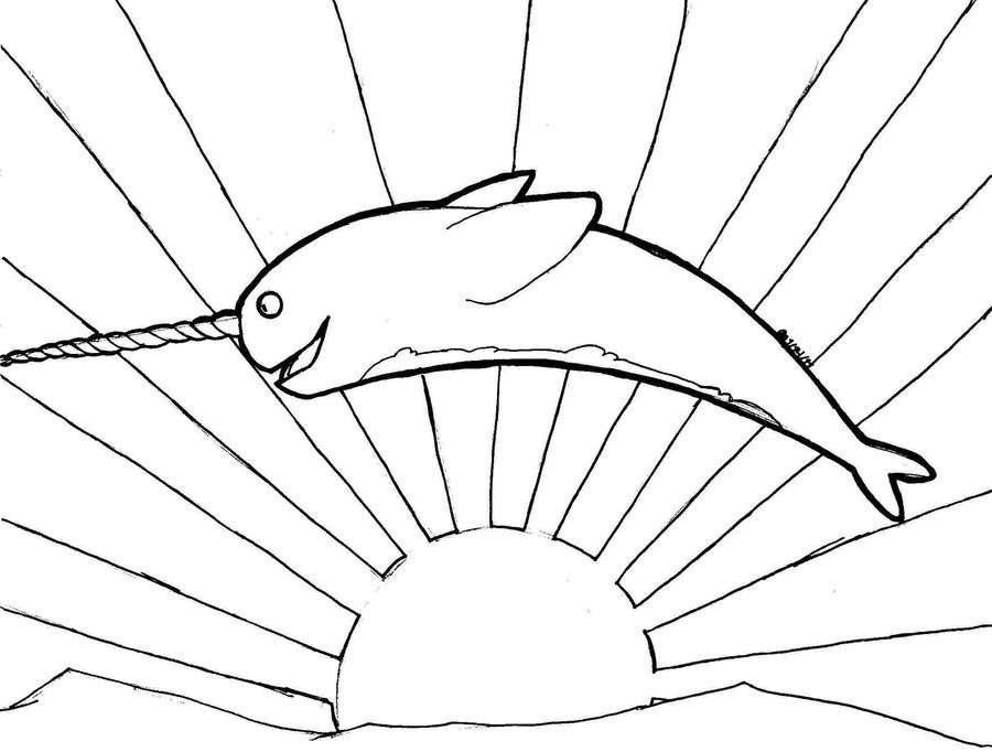 900x682 How To Draw Narwhals Cartoon Narwhal Drawing