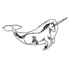 235x196 Image Result For Narwhal Drawings Narwhal