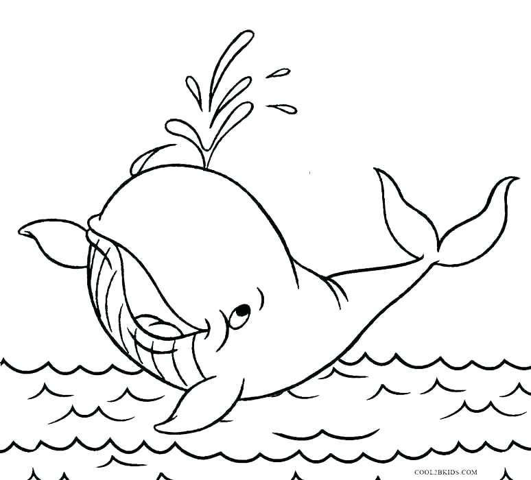 774x700 Sperm Whale Coloring Page Narwhal Is Toothed Whale Coloring Page
