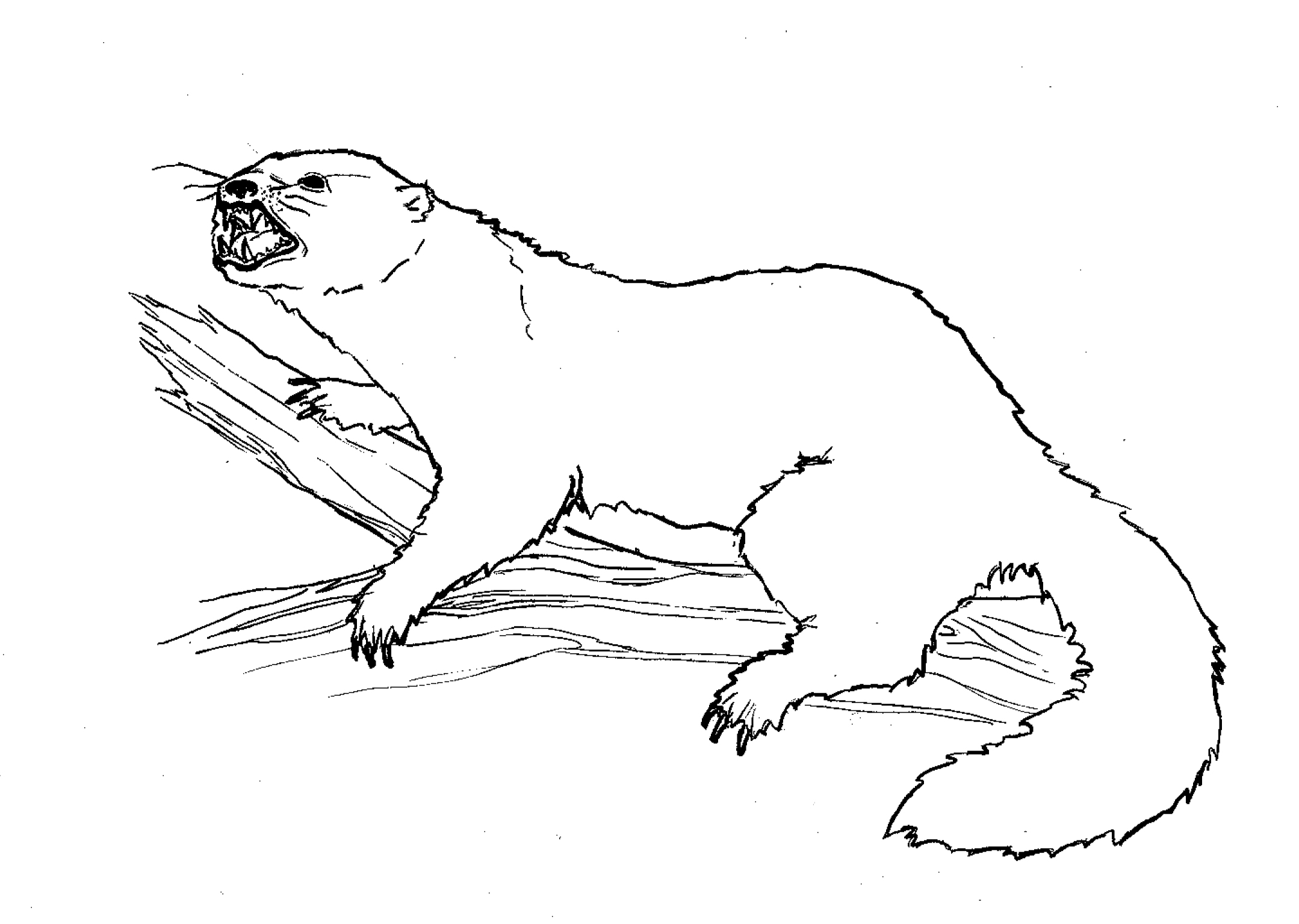 2158x1535 N'East Illustrated Fisher Cat N'East Style