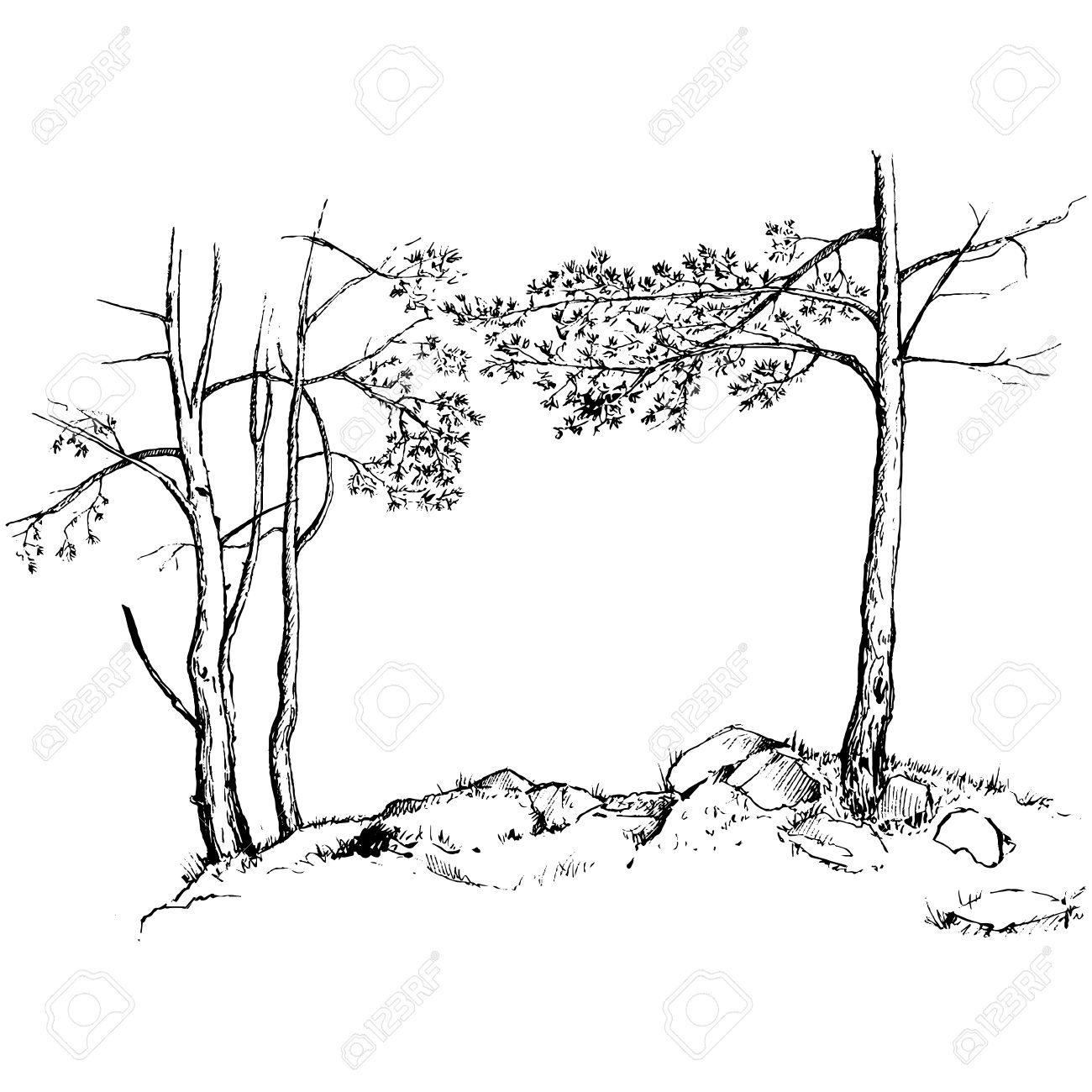 1300x1300 Pine Trees, Grass And Rocks Drawing By Ink, Sketch Of Wild Nature