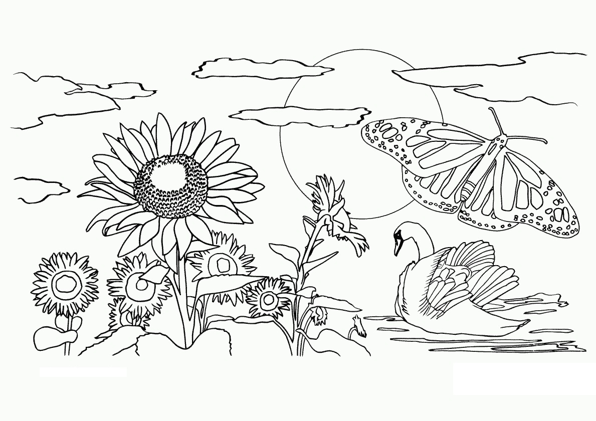 1189x840 Drawn Nature Coloring Sheet