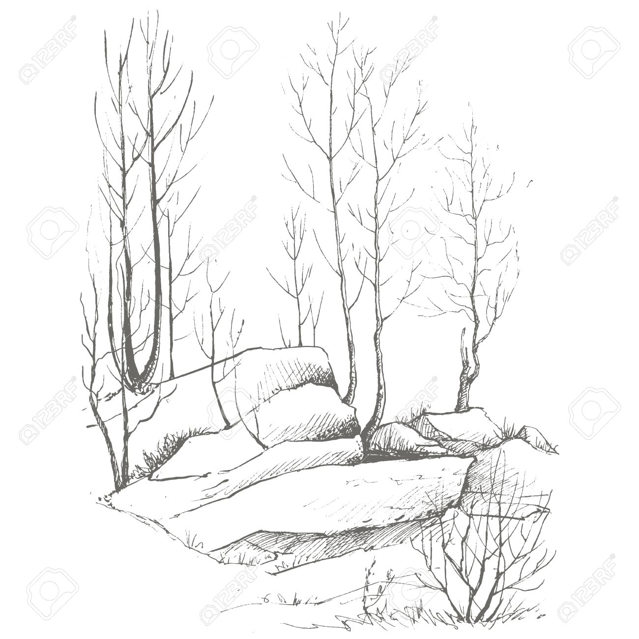1300x1300 Young Birch Trees, Bushes And Rocks Drawing By Ink, Sketch Of