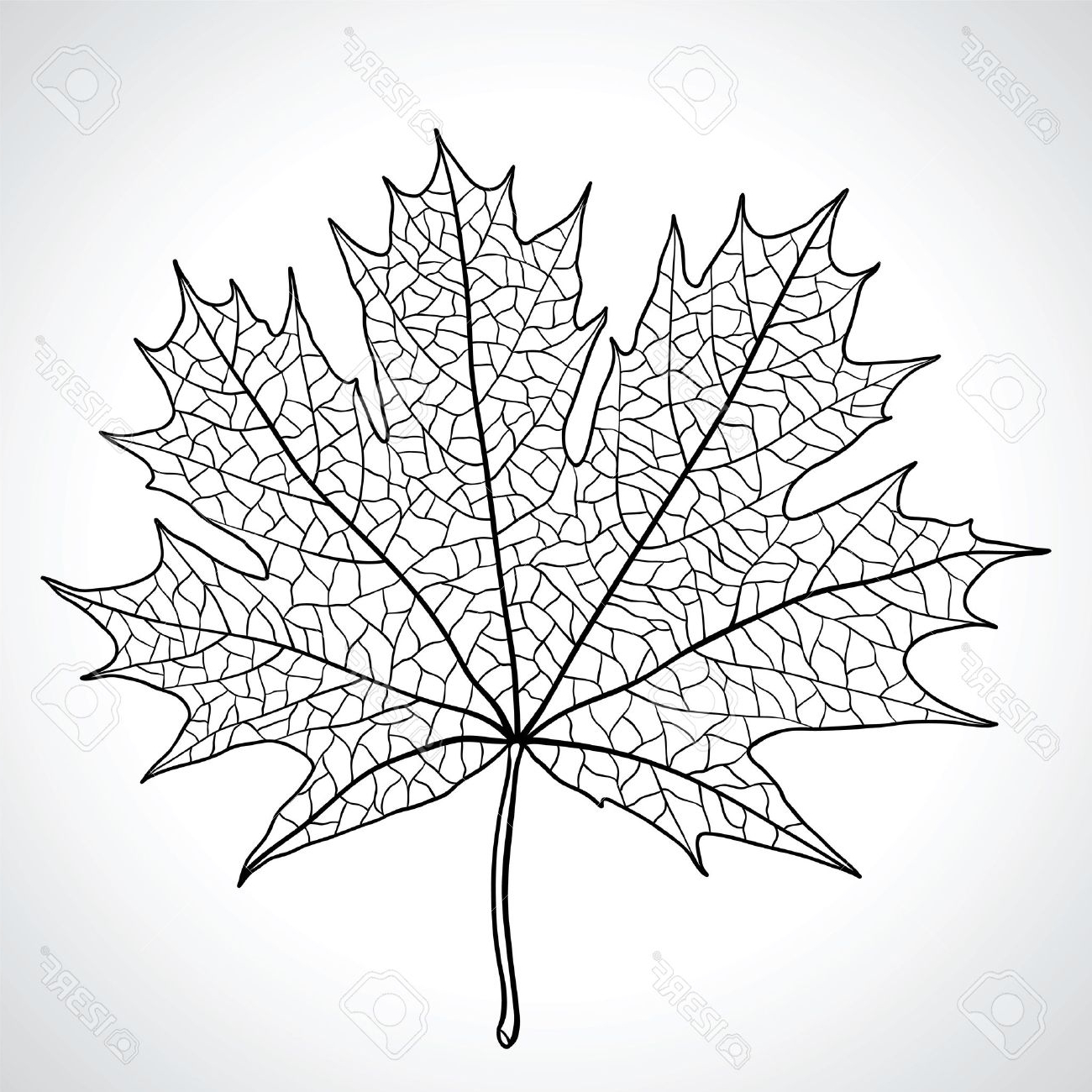 1300x1300 Black And White Nature Drawing Image In Hd