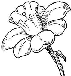236x253 Drawn Flower Nature