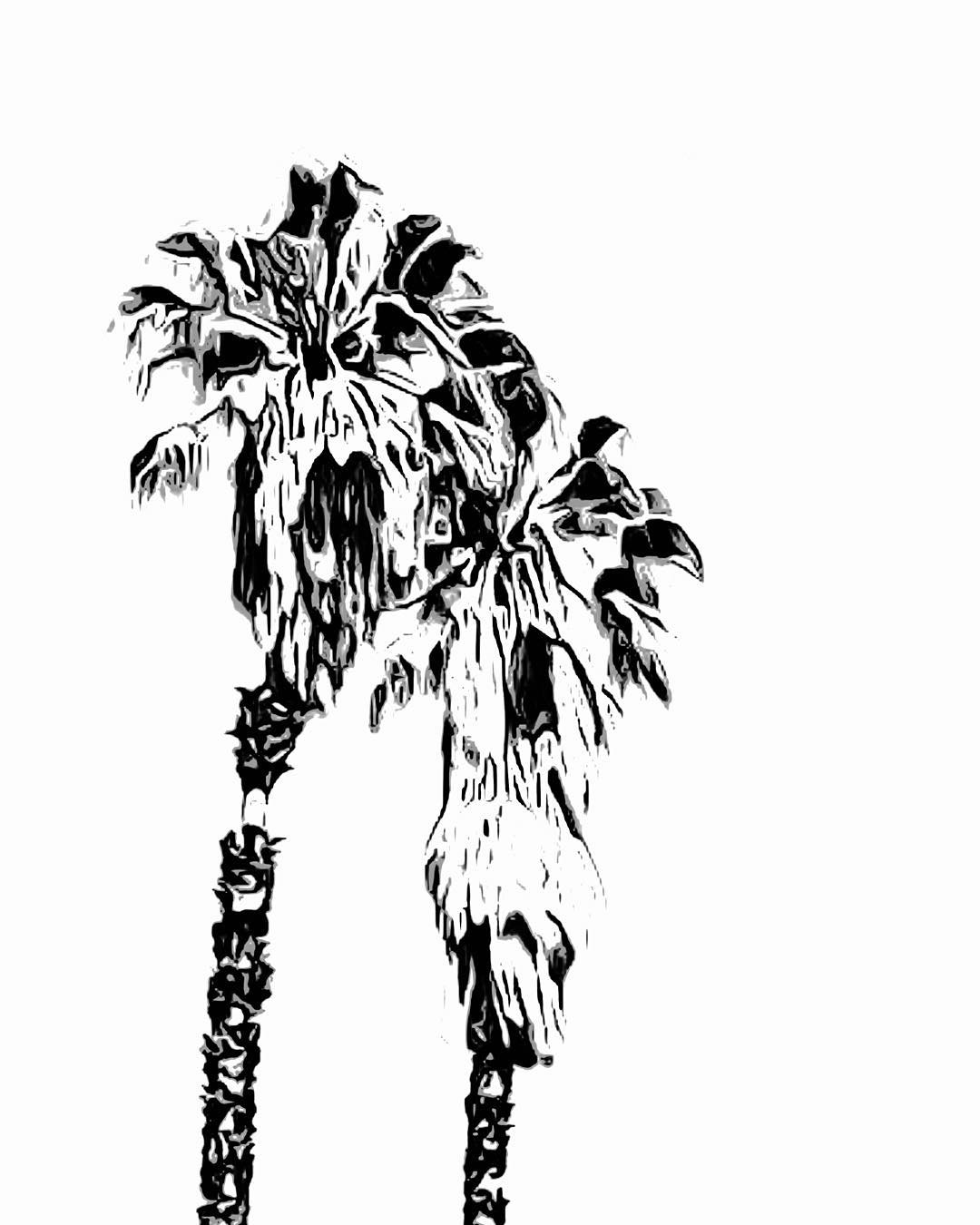 1080x1350 My Word With Douglas E. Welch Palm Trees Via