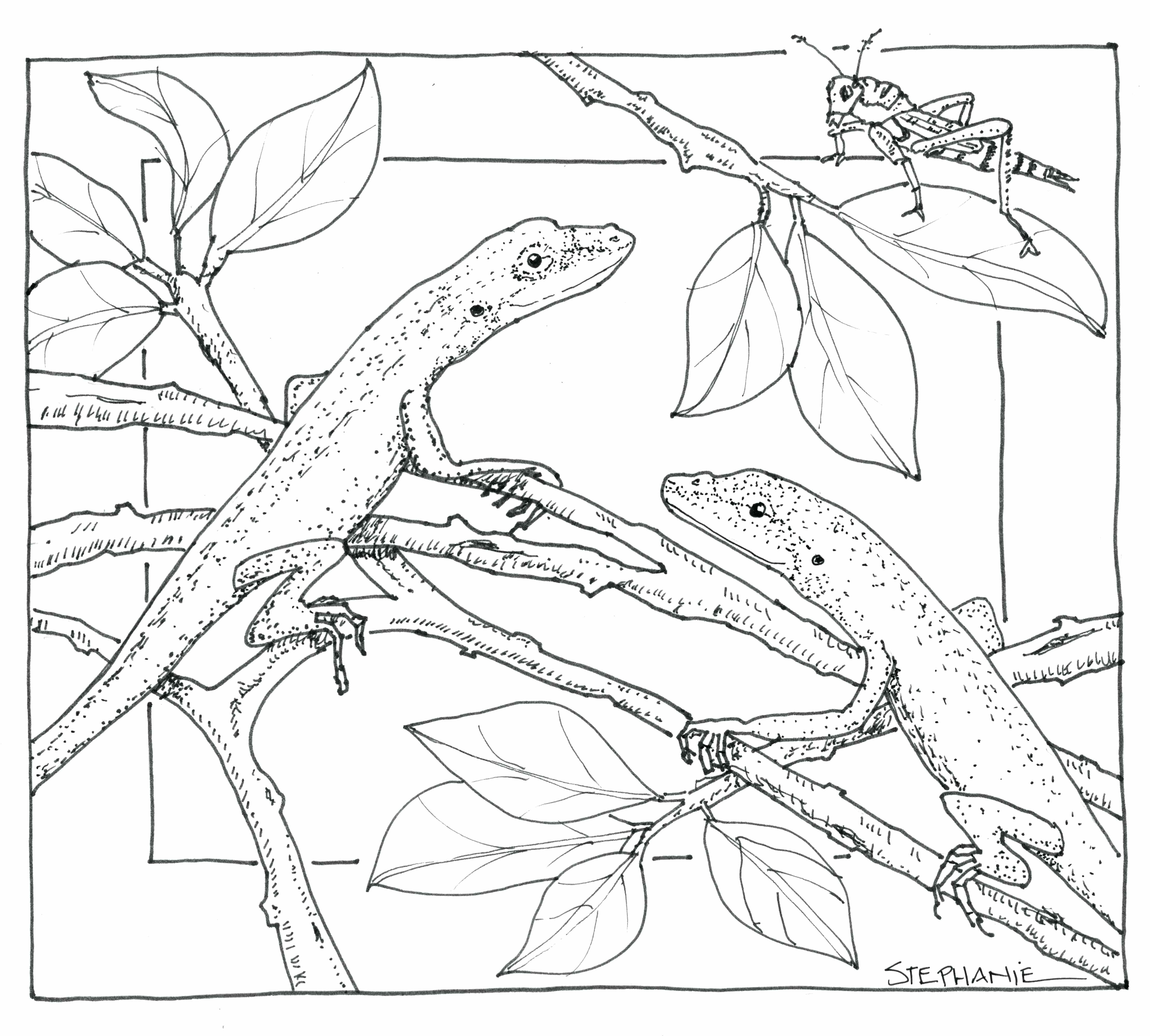 4436x3997 Coloring Nature Scene Coloring Pages Draw With Additional Print
