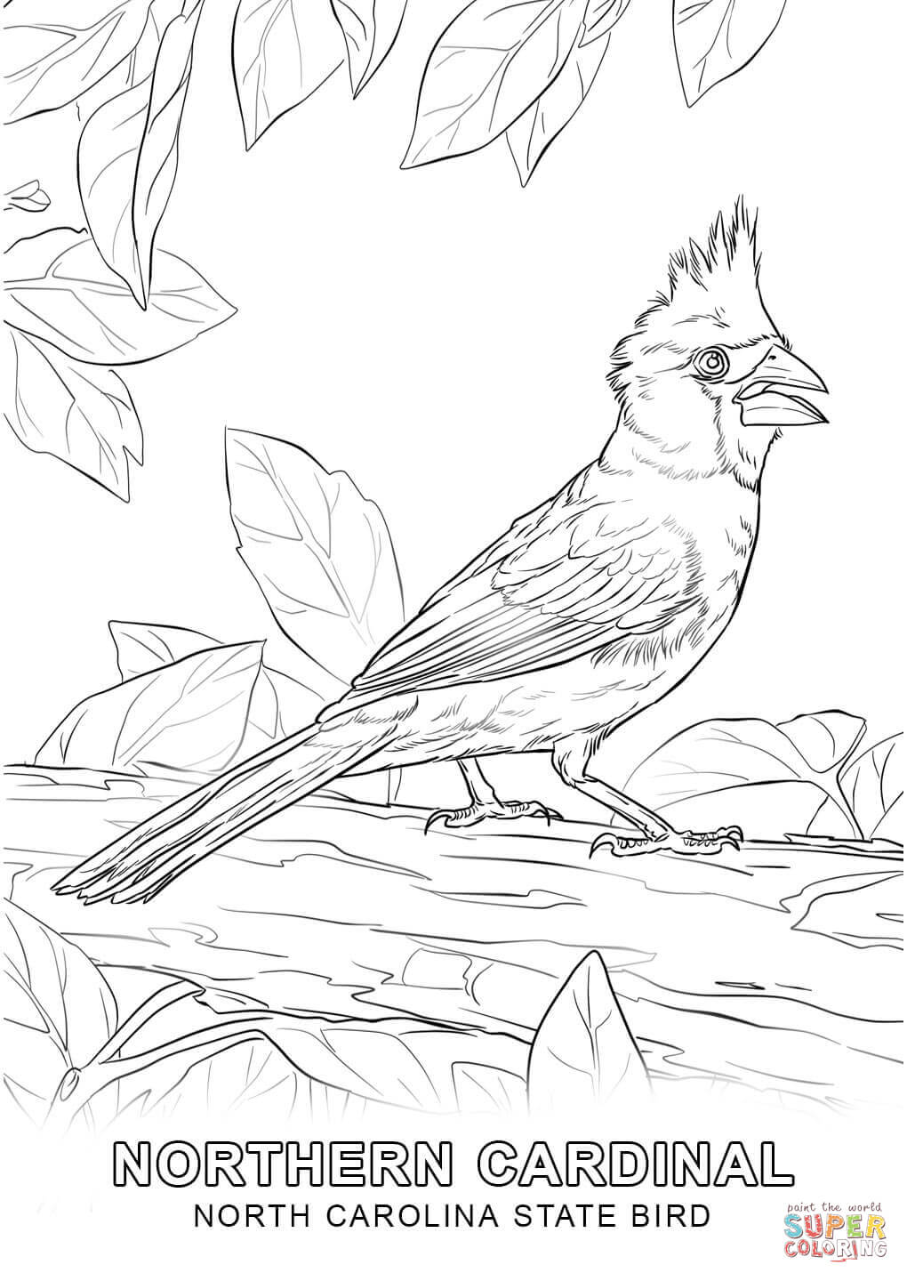 1020x1440 North Carolina State Bird Coloring Page North Carolina State Tree
