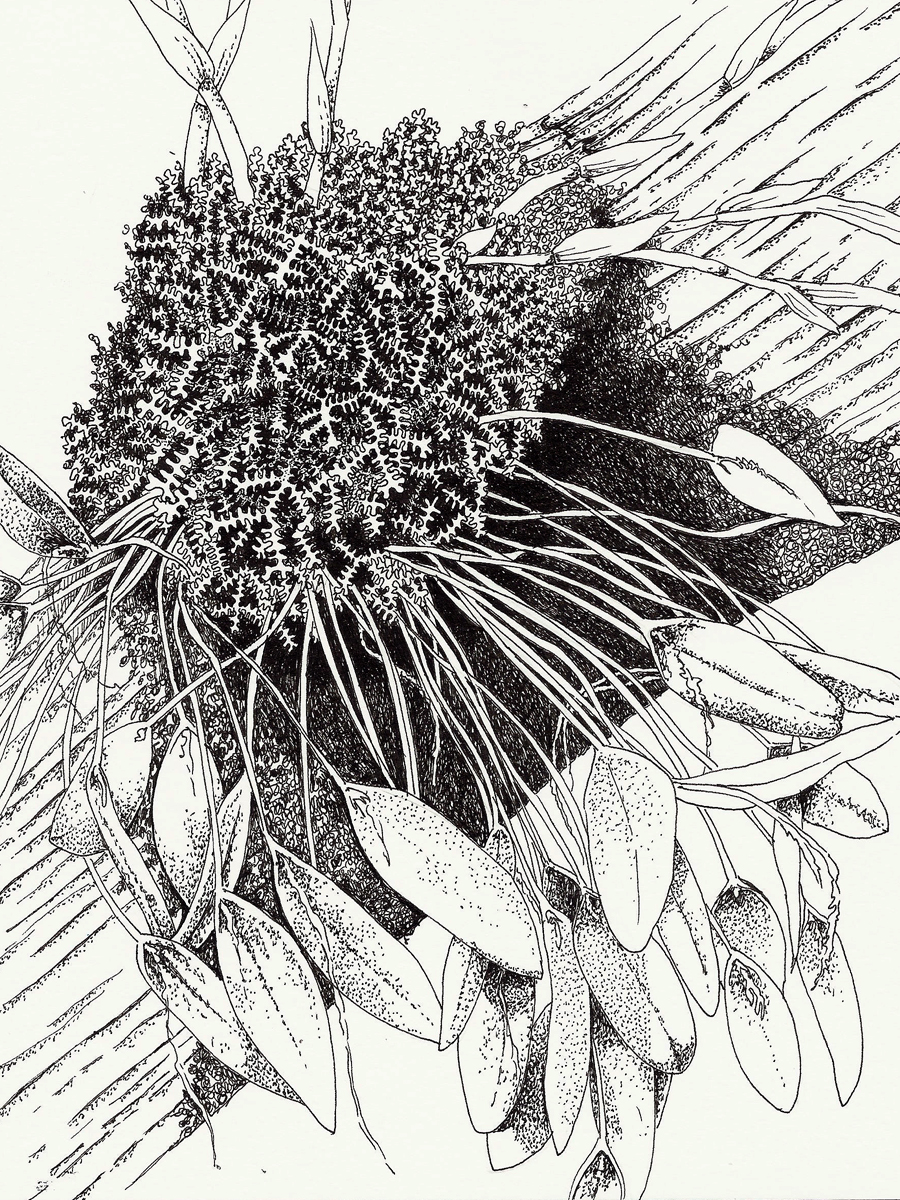 900x1200 Botanical Drawing Botanical Drawings, Negative Space And Drawings