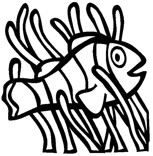 nemo clown fish coloring pages | Nemo Fish Drawing at GetDrawings.com | Free for personal ...