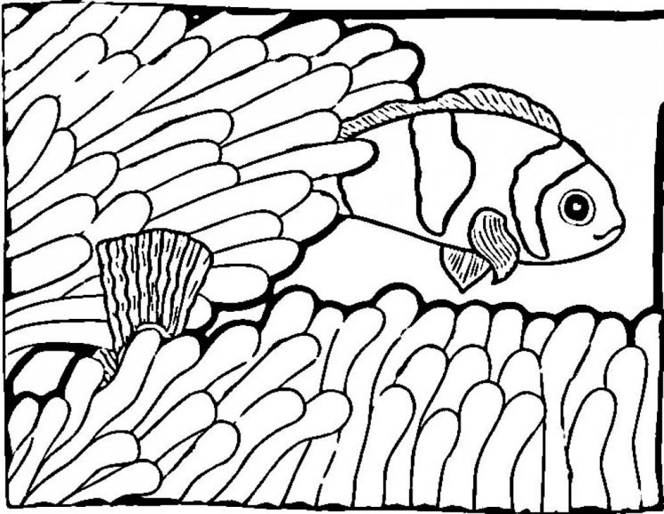Nemo Fish Drawing at GetDrawingscom Free for personal use Nemo