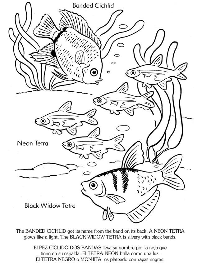 650x852 Welcome To Dover Publications Coloring Pages~4 Kids