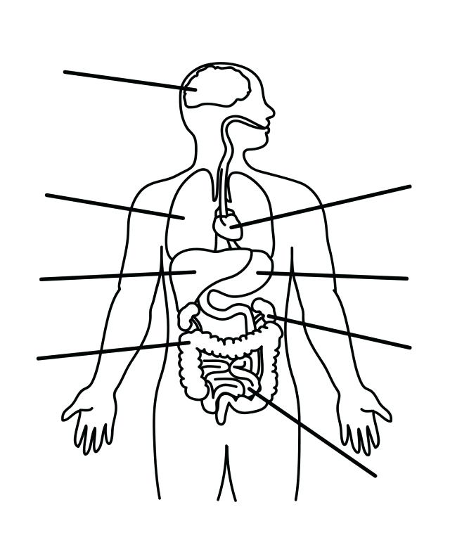 640x768 Anatomy Coloring Page Anatomy Coloring Pages Earthworm Anatomy