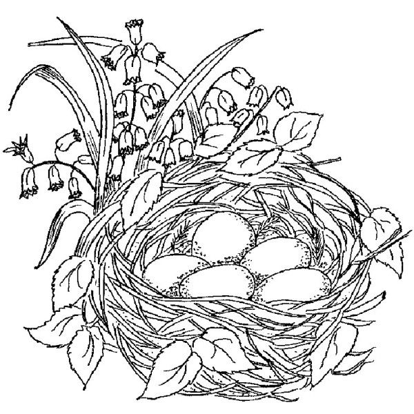 Nest Drawing at GetDrawings | Free download