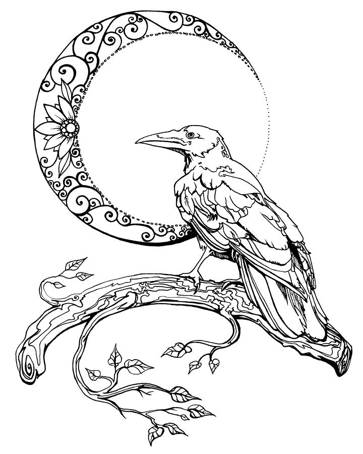 720x900 Crescent Moon Crow Drawing By Katherine Nutt