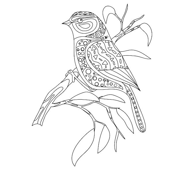 640x610 68 Best Coloring Pics Images On Colouring, Bird