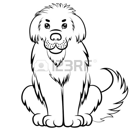 Newfoundland Dog Drawing