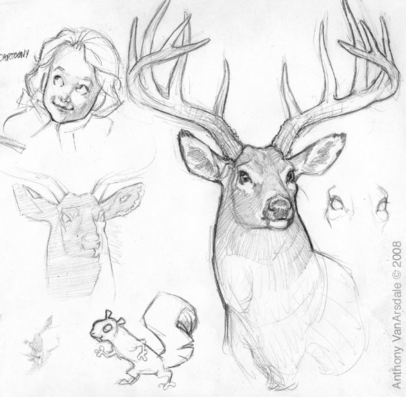 586x573 This Is A Nice Sketch Of A Male Deer With Antlers, Drawn By