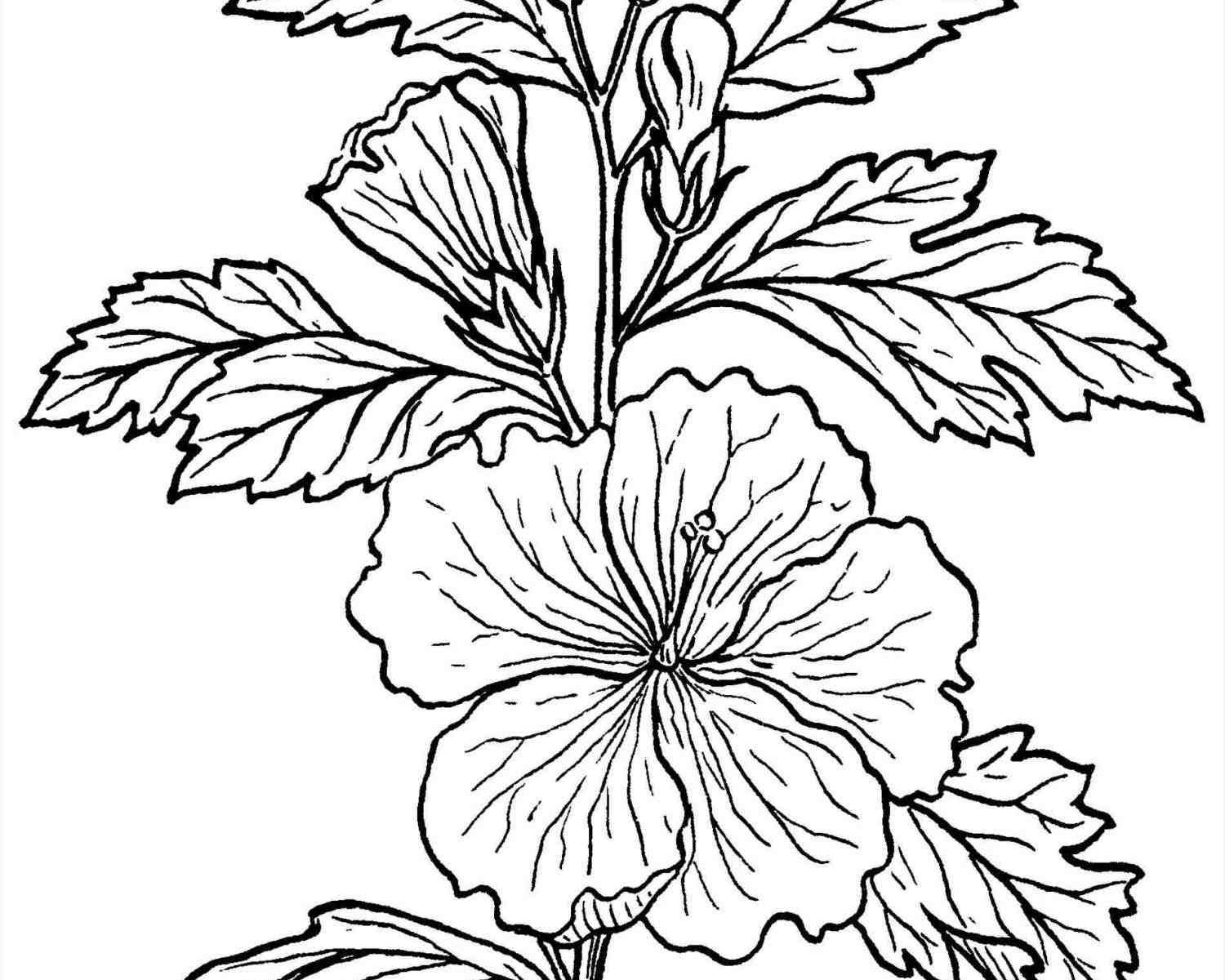 1500x1200 Plants Coloring Pages Begonia Plant To Print Desert Animals Free