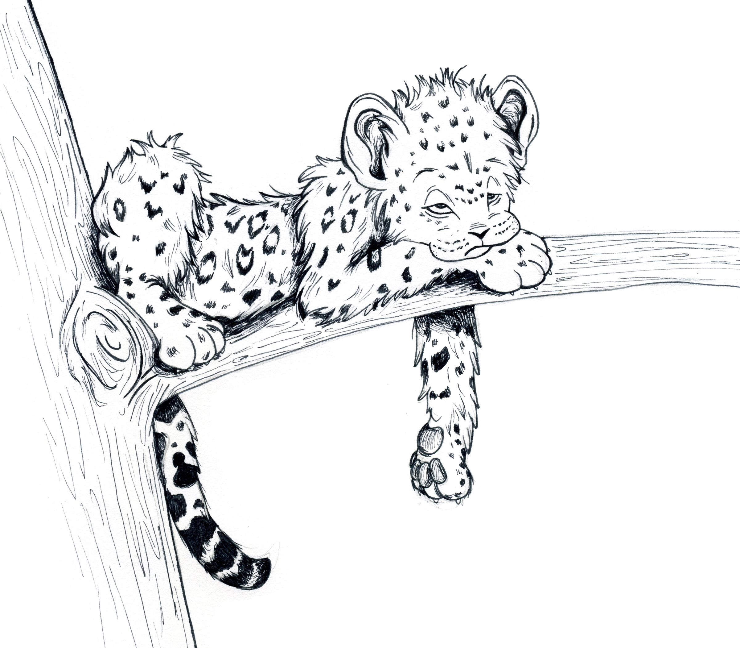 2400x2100 Baby Animal Sketches Cute Baby Animal Drawings Tiger
