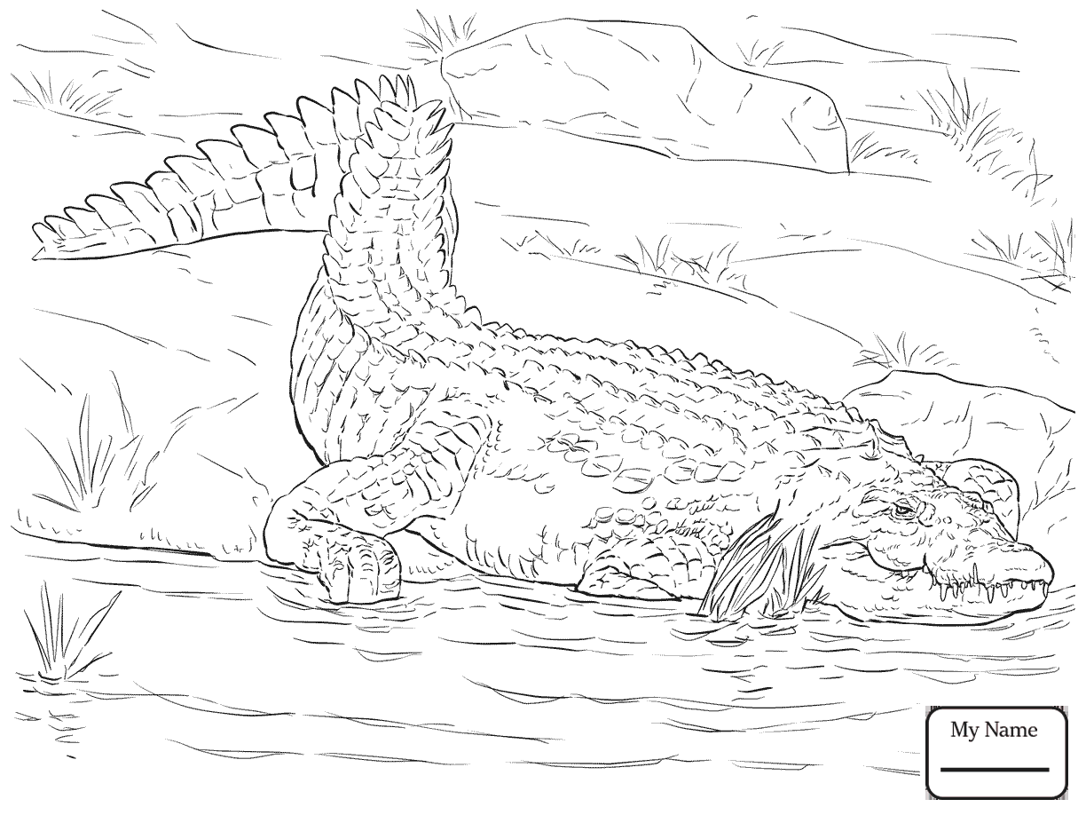 Nile Crocodile Drawing at GetDrawings
