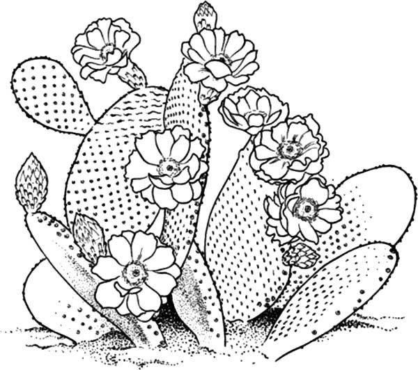 600x532 355 Best Cactus Images On Succulents, Bedroom Ideas