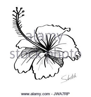300x320 Stem Vegetable, Illustration Hand Drawn Sketch Of Nopal Cactus