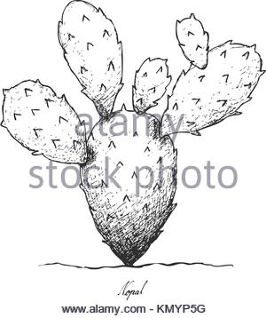 300x358 Line Cactus Plant With Natural Bush Vector Illustration Stock