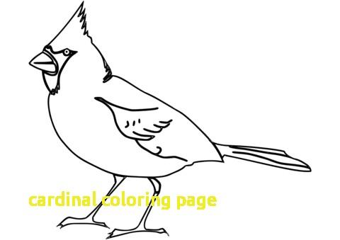 480x339 Cardinal Coloring Page