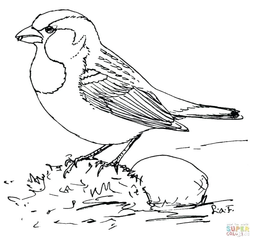 852x806 Cardinal Coloring Pages