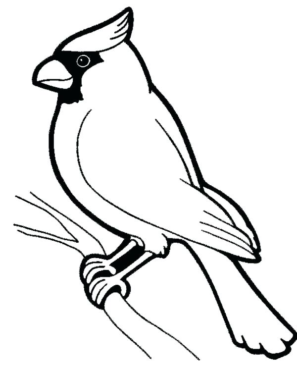600x751 Daring Cardinal Coloring Page Pages Bird Male